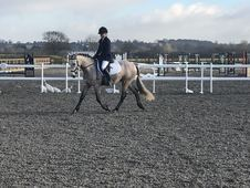 15. 1 Andalusian Gelding 5yr old