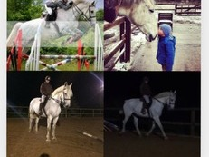17.2hh Hunter Type