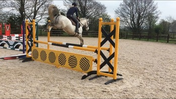 14hh Connemara Jumping / All Rounder Pony