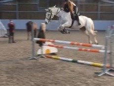 15hh All-Rounder,Jumps for fun!