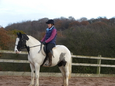 15hh Cob Mare Jazz- SOLD