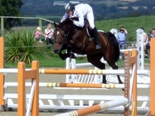 Outstanding 16HH showjumping mare by numero uno