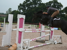15.3 hds 8 Year Old Bay Mare for Sale (REDUCED!)