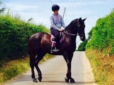 REDUCED +++ Stunning Irish Sports Horse - Murphy