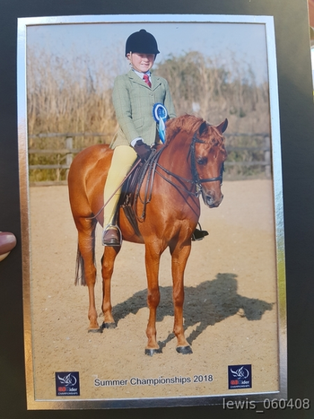 Handsome 13.2hh Show Pony Gelding For Sale