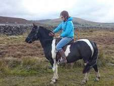 Smart Coloured Gelding