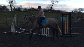 Unmissable Pony for Sale!