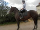 Lippizaner competition horse for permanent loan for sale in United Kingdom