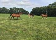 VIDEO ADDED - Broodmare by Finns Clover (back to clover hill) with Filly foal by RID