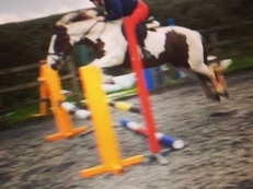 Amazing 13.2hh 6 year old mare ideal 2nd pony
