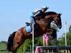 15hh, 10years old, Bay, Gelding