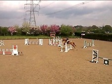 Show Jumper - All Rounder