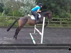Smart Potential JRN/Young Riders Horse