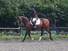 Very sweet mare for sale