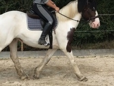 hack / riding school cob
