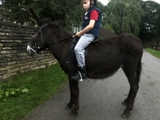 Quite Mare Riding Donkey