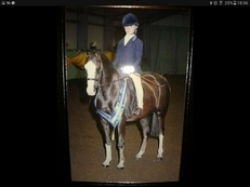 13,2 gelding 10 years please text or call for more info