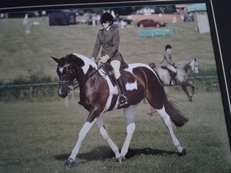 16.1 Irish Black and White Mare
