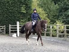 Sharer Wanted For Laid Back 17.2hh Gelding