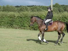 Retired exracehorse looking for forever home