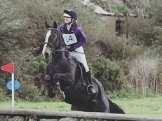 All rounder schoolmaster and jumping diva