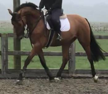Homebred Horses for sale