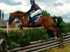 16.1hh all rounder