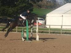 Super Show Jumper/Sports Horse with a Great Future