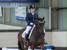 14.2hh, 8yo, dressage competition pony