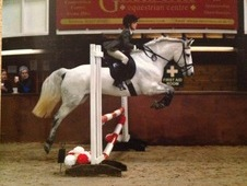 Smashing all rounder/PC Pony