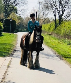 The Perfect Family Allrounder - 14.2hh 11years Coloured Mare