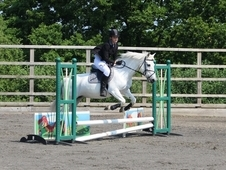 Ideal Pony Club /RC pony for competent rider