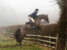 Fantastic Hunter, Showjumper and potential to go far