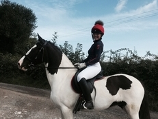 *Reduced* Outstanding All rounder pony