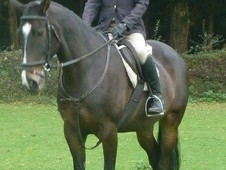 Potential Performance Horse, Dorset