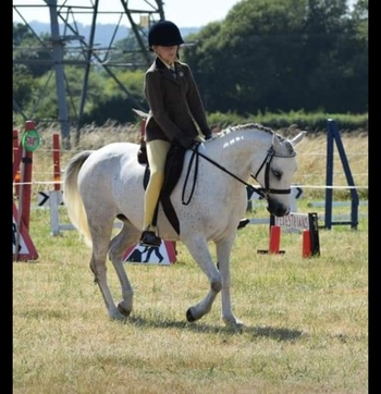 Stunning pony club all-rounder