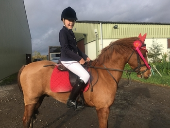 Pretty welsh section B gelding 12.3 hh