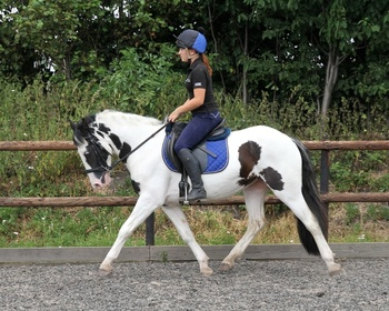 Super little 14:1hh, Irish Pony with lots of scope!