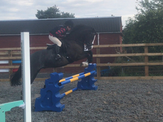 *Frankie* 10yo 12.2hh Talented Jumping Pony!