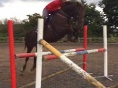 One of a Kind - Beautiful 16hh Liver Chestnut Mare