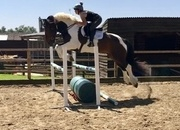 PROVEN HUNTER / ALLROUNDER/ RIDING CLUB / MAXI COB