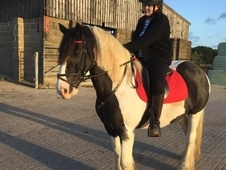 14. 2hh Bombproof Gelding For Share