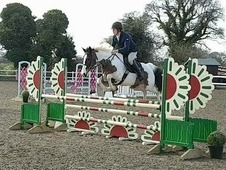 Ultimate show jumper/eventer