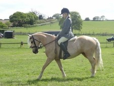 fun pony club all rounder& potential BS super star