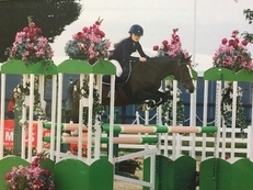 Fantastic Show Jumping Pony