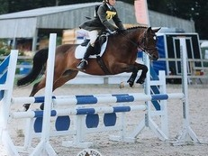 14hh Competition Pony