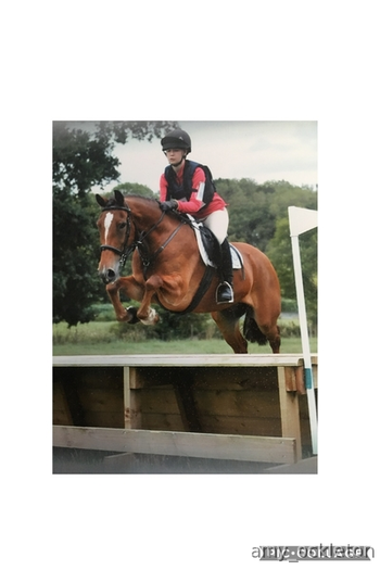 Perfect Pony Club Allrounder