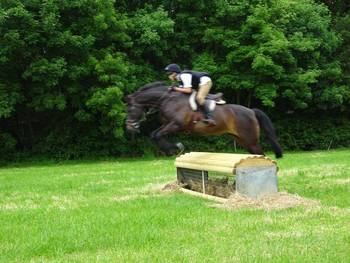 Stunning pony club all-rounder for sale