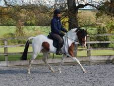 Top Potential Competition Pony 14. 2hh