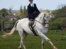 This mare floats! 16hh All-Rounder/Riding Club
